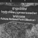 The Kabiliththa shrine is found deep within the Yala forest, and has routes up to it from Monaragala, Kumana and the Kataragama-Buththala road.
